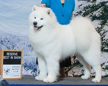 GCh. White Eagle's The Sky's The Limit for Alpineglo, Natl BISS (Houston)